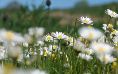 Der Frühling lockt…..