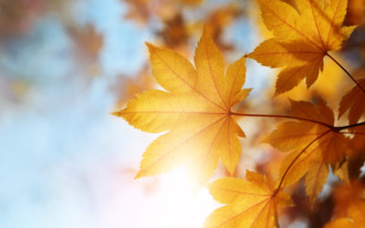 Goldener Herbst